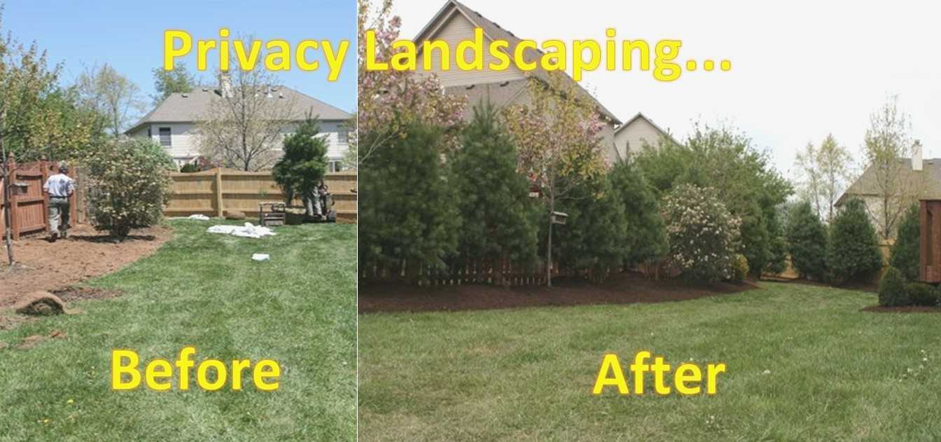 Backyard Privacy Landscaping Ideas On Landscaping For pertaining to 11 Clever Initiatives of How to Build Landscaping Ideas For Backyard Privacy