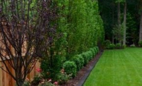 Nice 48 Backyard Landscaping Ideas With Privacy Fence for 12 Genius Ways How to Improve Backyard Landscaping Ideas For Privacy