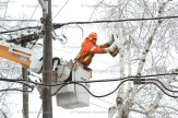 An Erie Thames Power employee trims a tree on Hope Street East Friday following the ice storm.