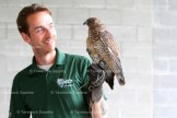 Kyle Horner with Whistler, a Broad-Winged Hawk.