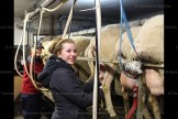 Leah Wagler milks sheep, with her mother Kari in the background. They milk 120 sheep at their 18-unit rapid exit parlour at Cedar Vewe Dairy Sheep Farm.