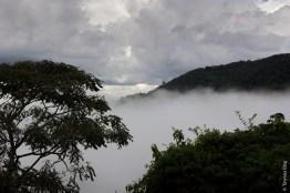 Nyungwe Forest (Rwanda)