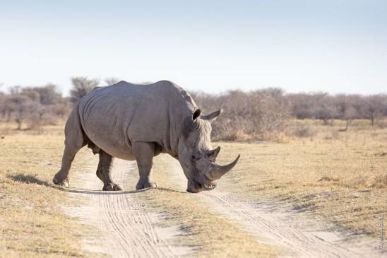 Kama Sanctuary (Botswana)