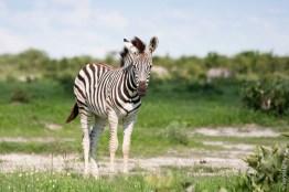 CHobe National Park (Savuti), Botswana