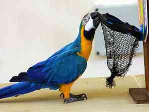birds in zoo