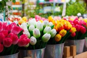 https://pixabay.com/en/flower-group-colored-colorful-69490/