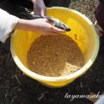 薪で蒸すこだわり味噌作り&ひと樽漬けますよー。笑いいっぱいの会となりました。その2