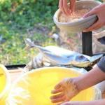発酵料理家たやまさこ、へしこひと樽漬けるワークショップ開催いたしました。