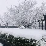 発酵のリズム♪高島にやっと雪が降りました。