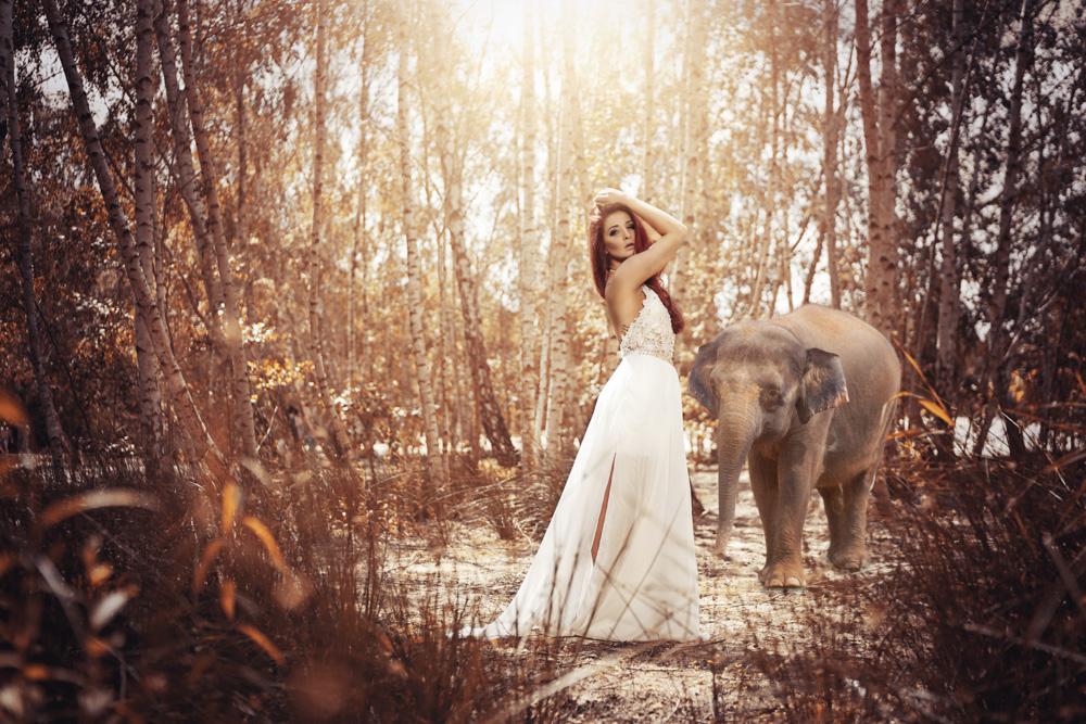 1-elefant-nachher