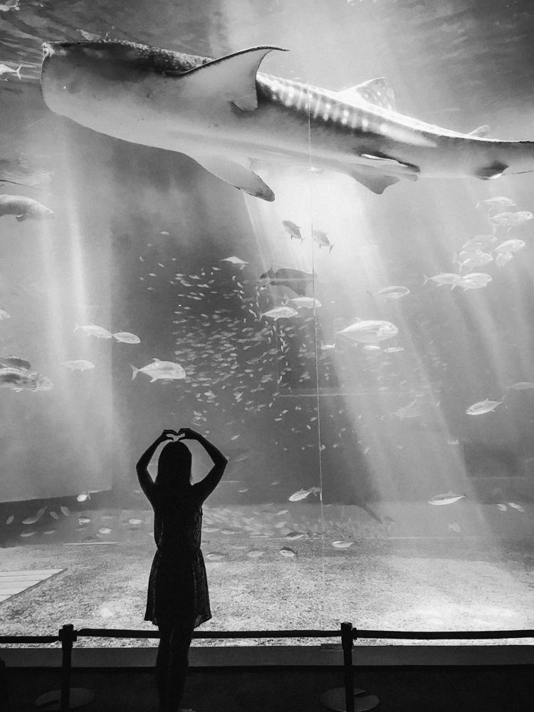 nachher-underwater-film-10