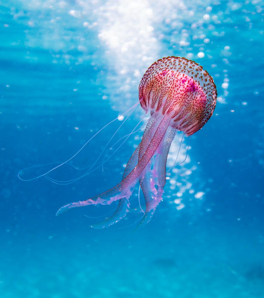 vorher-underwater-clean-1