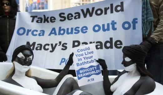 http://www.seaworldofhurt.com/breaking-seaworld-campaign-wins-round-one-orca-breeding-end/