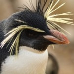 Beware the Angry Google Penquin!