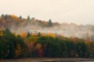 Golden Foliage Fog 1 | Taylor Cannon Photography