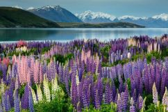 All these images are mine, except for this one! I guess I was too captivated by the beauty of Lake Tekapo and forgot to take a picture!