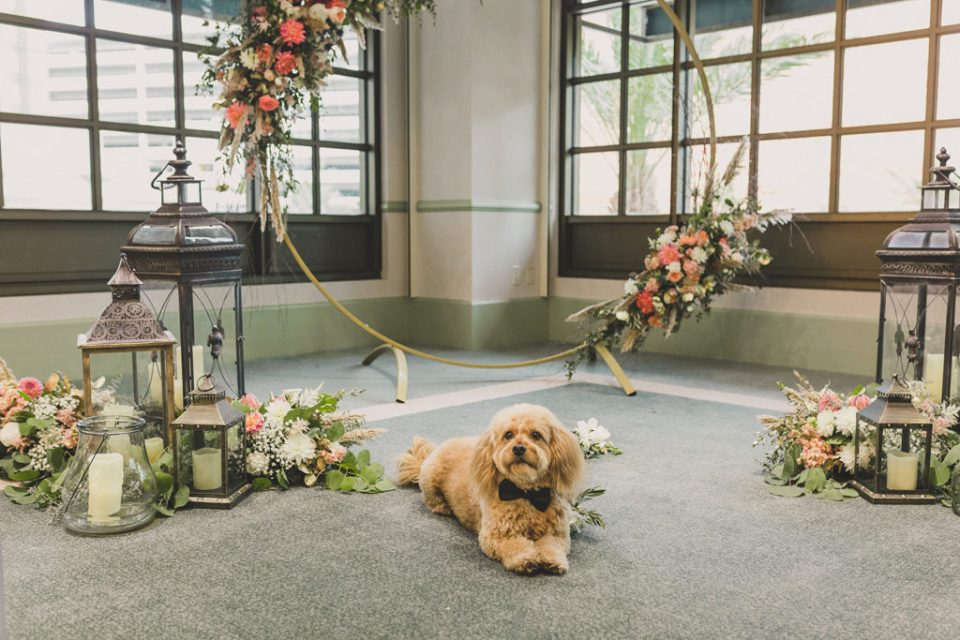 dog poses in front of wedding ceremony arbor photographed by Taylor Made Photography