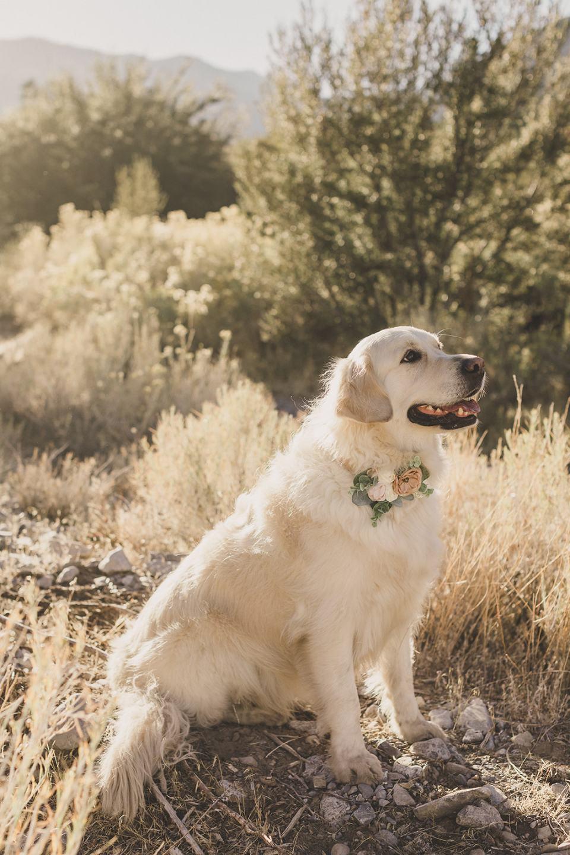 dog poses in brush at Mt Charleston Family Portraits