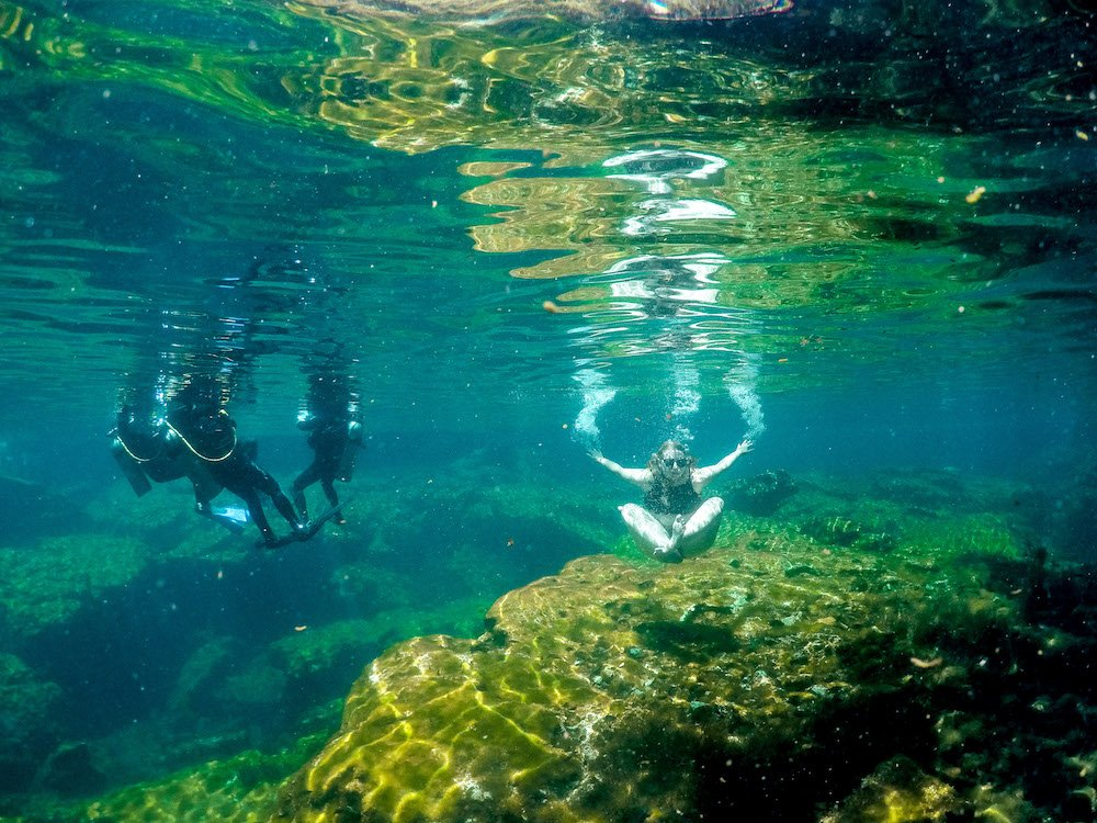An underwater shot of Jardin del Eden in Quintana Roo, with people swimming and scuba diving