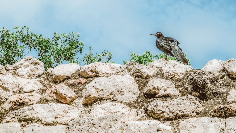 A crow sits on top of ancient stones at the site of Chichen Itza in Mexico