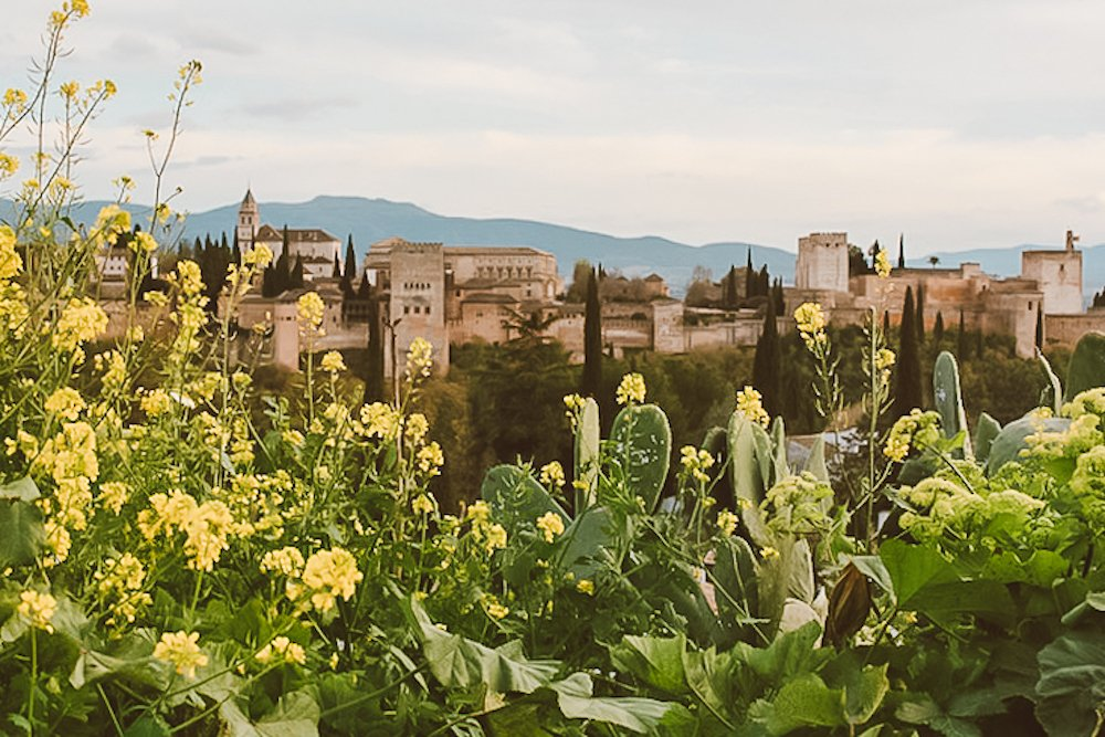 A view of the Alhambra behind green and yellow cacti