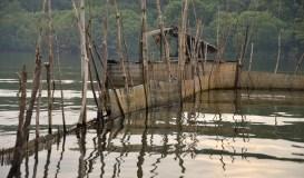Fish and prawn trap