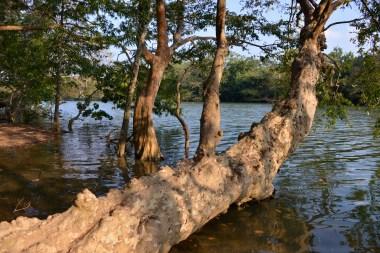 Across the river is Yala