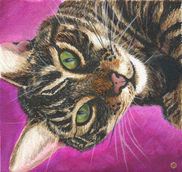 Felix D Cat