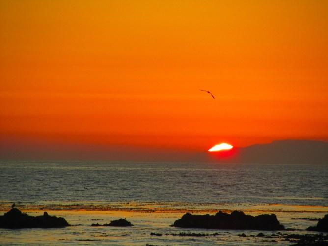 Laguna Beach 8