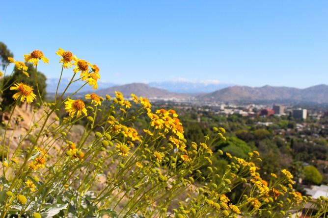 Mt Rubidoux Riverside California 4