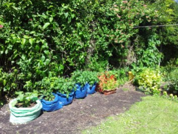 'Bag garden' in the green
