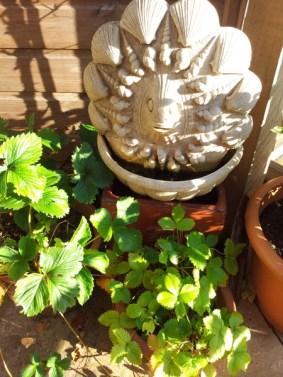 Garden gargoles and potted plants