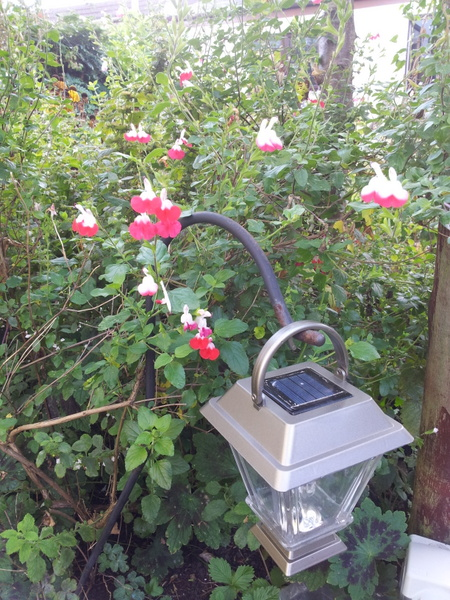 Garden lamp in the bushes