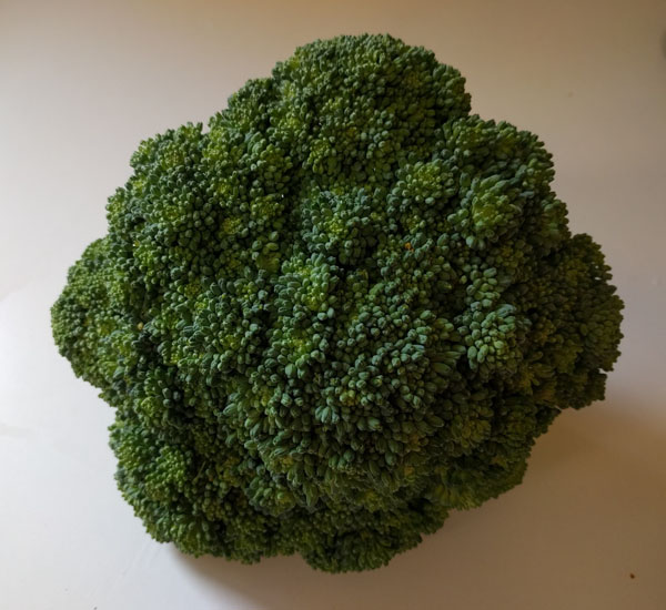 head of brocolli