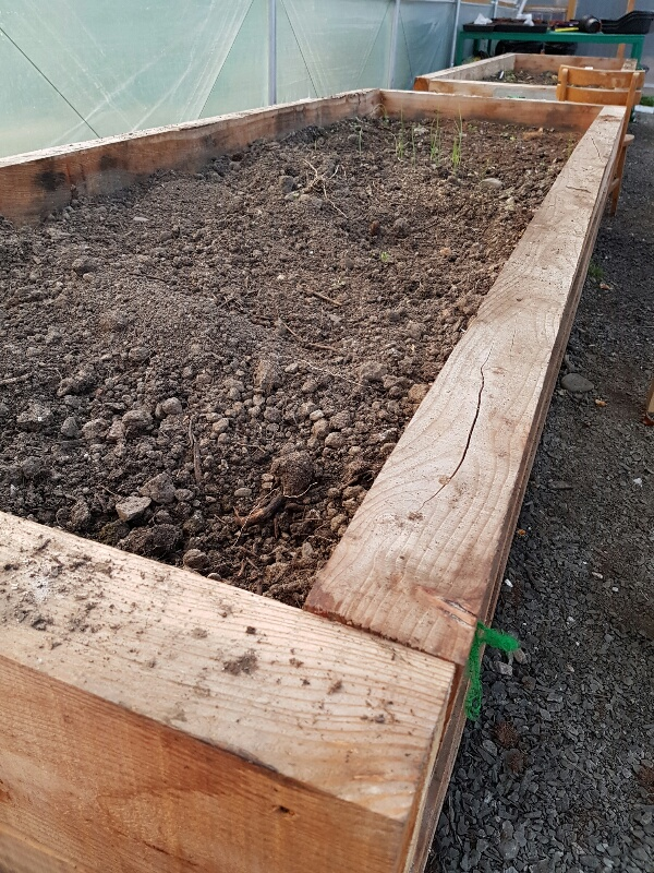 A photo of empty raised beds in the polytunnel