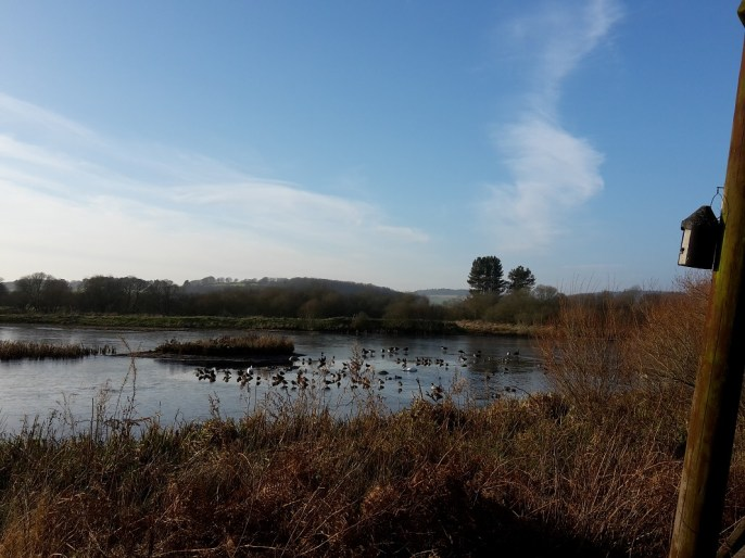 A photo of a view from bird hide at Morton Lochs