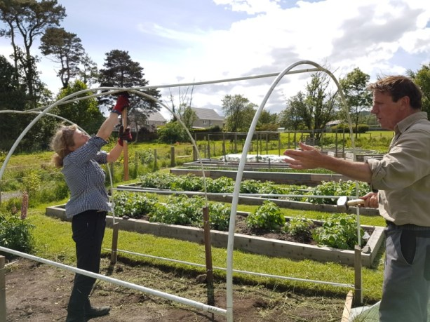 Putting up the polytunnel for corn and courgettes