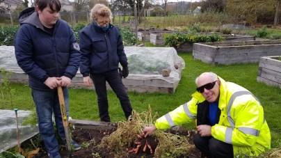Brendan, Ian and Jenny digging for oca