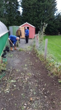 Craig, Ian and Peter clearing sunflower border