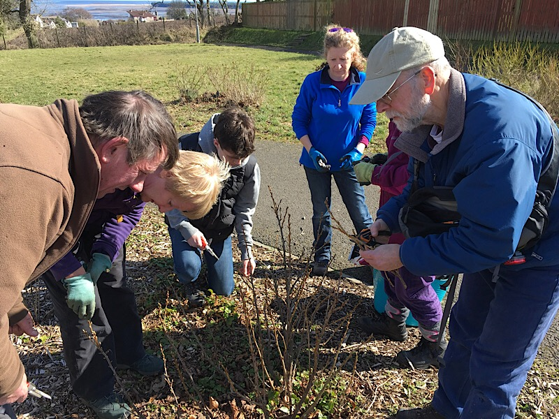 A photo of a group learning how to prune fruit bushes