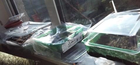 Mini-greenhouses reusing plastic packaging