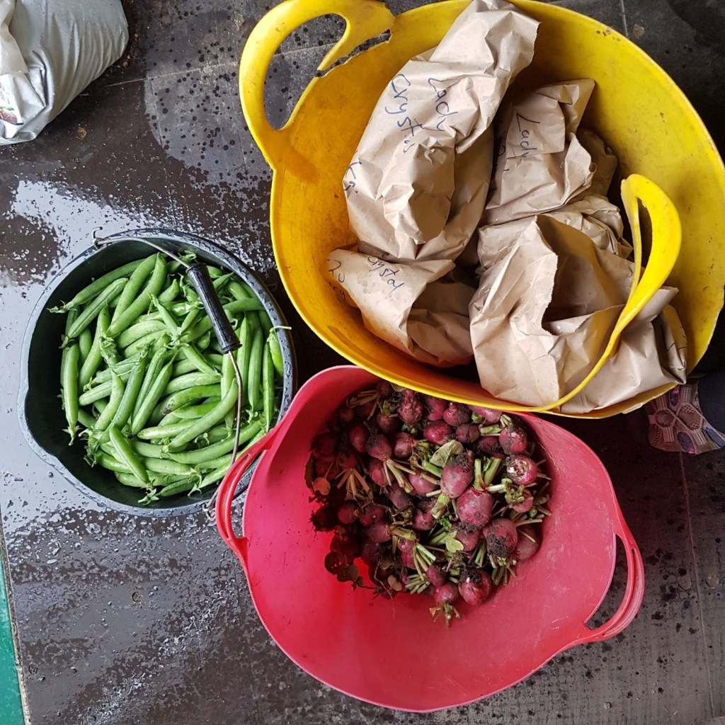 garden produce in july