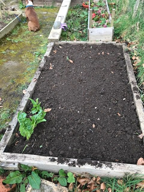 Compost spread on top of the garden bed