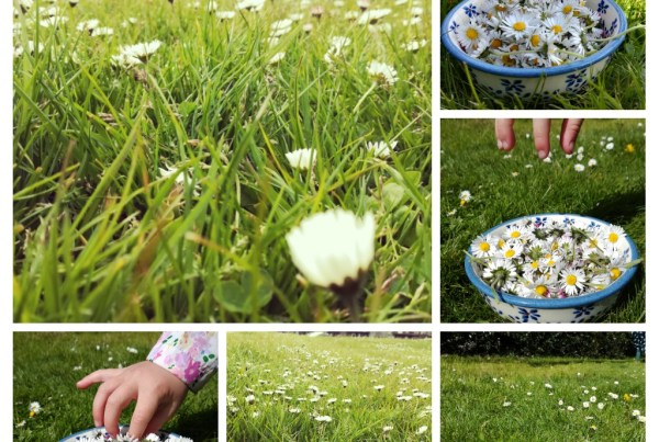 A photo of children picking daisies