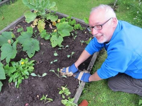 Fraser planing Brassica seedlings