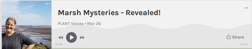 Marsh Mysteries podcast screen grab