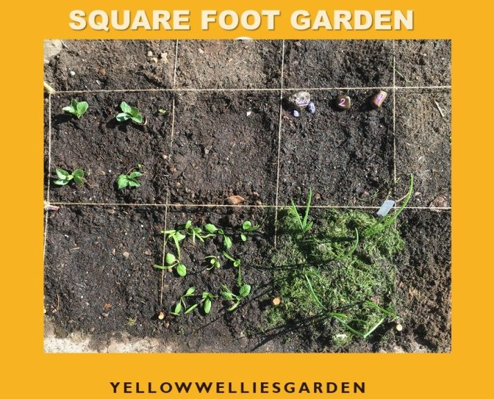 A photo of a square foot garden