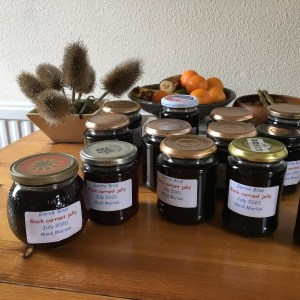 A photo of jars with Black currant jelly from Frui Tree Walk