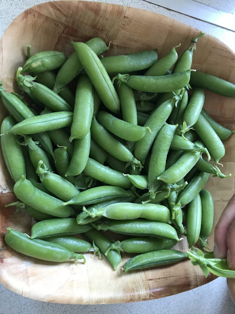 Harvest of peas from Carmen's lotti