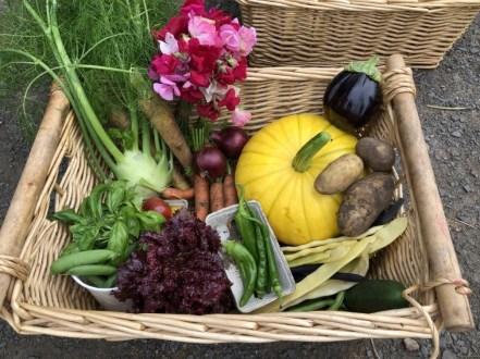 A photo of a veg box Tayport Community Garden